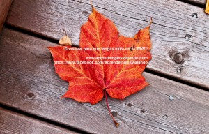 canadian_maple_leaf2